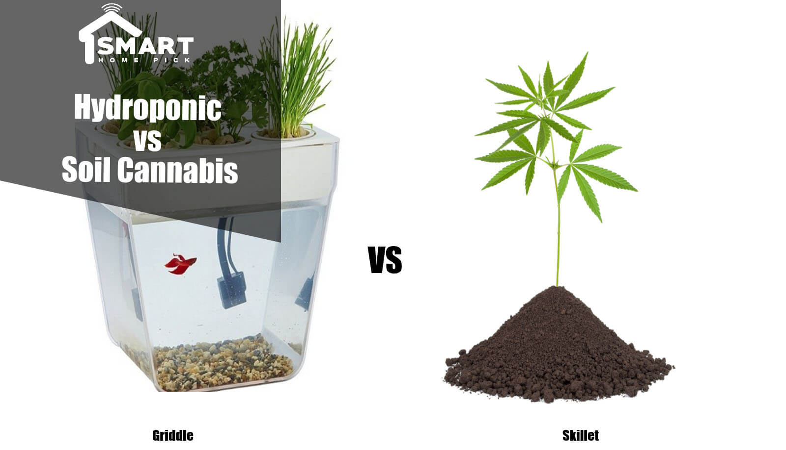 Hydroponic vs Soil Cannabis