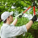 5 Important Tree Care Tips To Maintain Healthy Trees