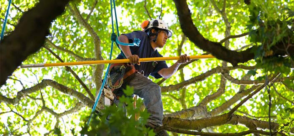 Important Tree Care Tips To Maintain Healthy Trees